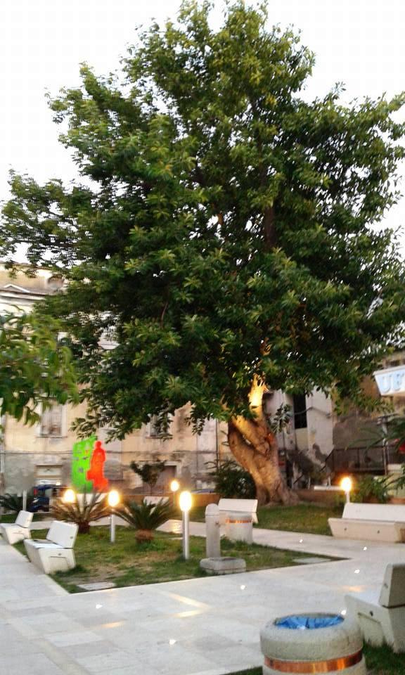 Il meraviglioso Ficus della Piazzetta